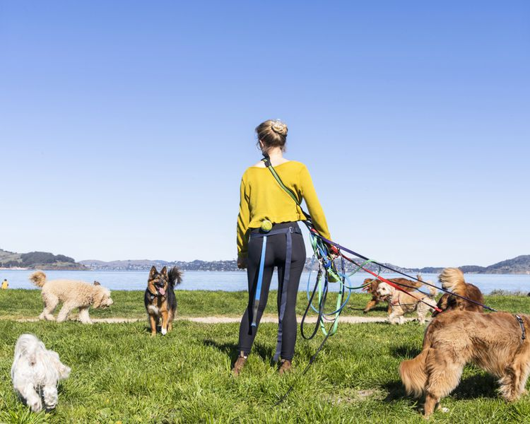 Walking Citizen Hound chiens sur une promenade dans Crissy Field, San Francisco. Les champions recevront un rapport de course sur leur smartphone.