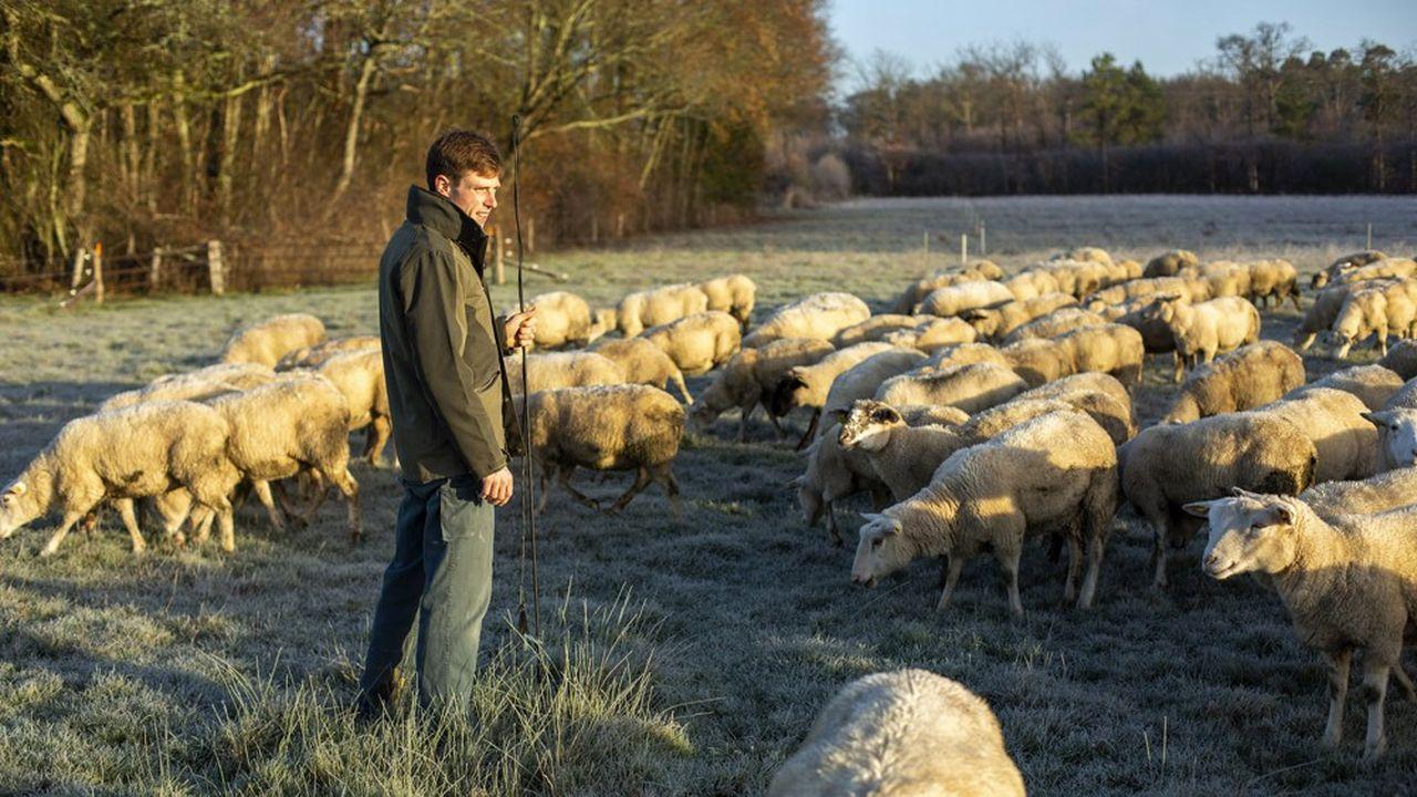 Un éleveur en region Centre. La profession regrette que, sur les viandes,«les engagements [des distributeurs] sont très faibles».