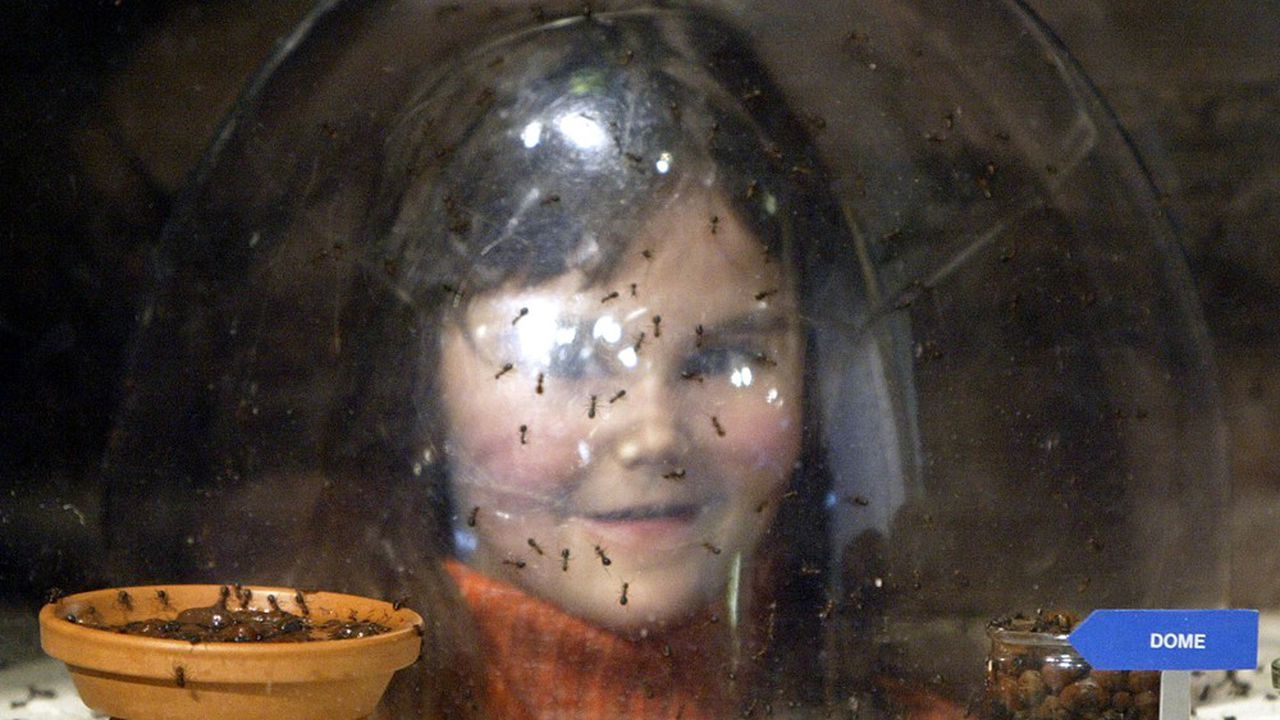 Une enfant se glisse sous un globe afin d'y observer des fourmis.