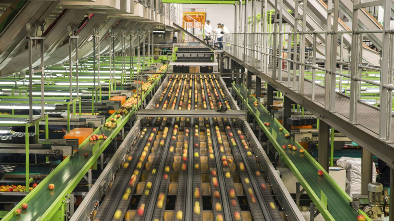 Les défaillances de grandes entreprises agroalimentaires se sont multipliées au niveau mondial ces trois dernières années, selon une étude de l'assureur-crédit Euler Hermes.