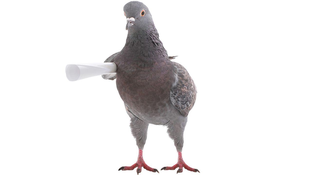 7837_1490799327_pigeons-entrepreneurs.jpg