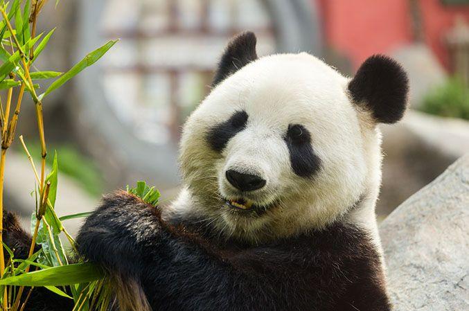 L'appétit de la Chine pour les grands noms du tourisme français est loin d'être rassasié...
