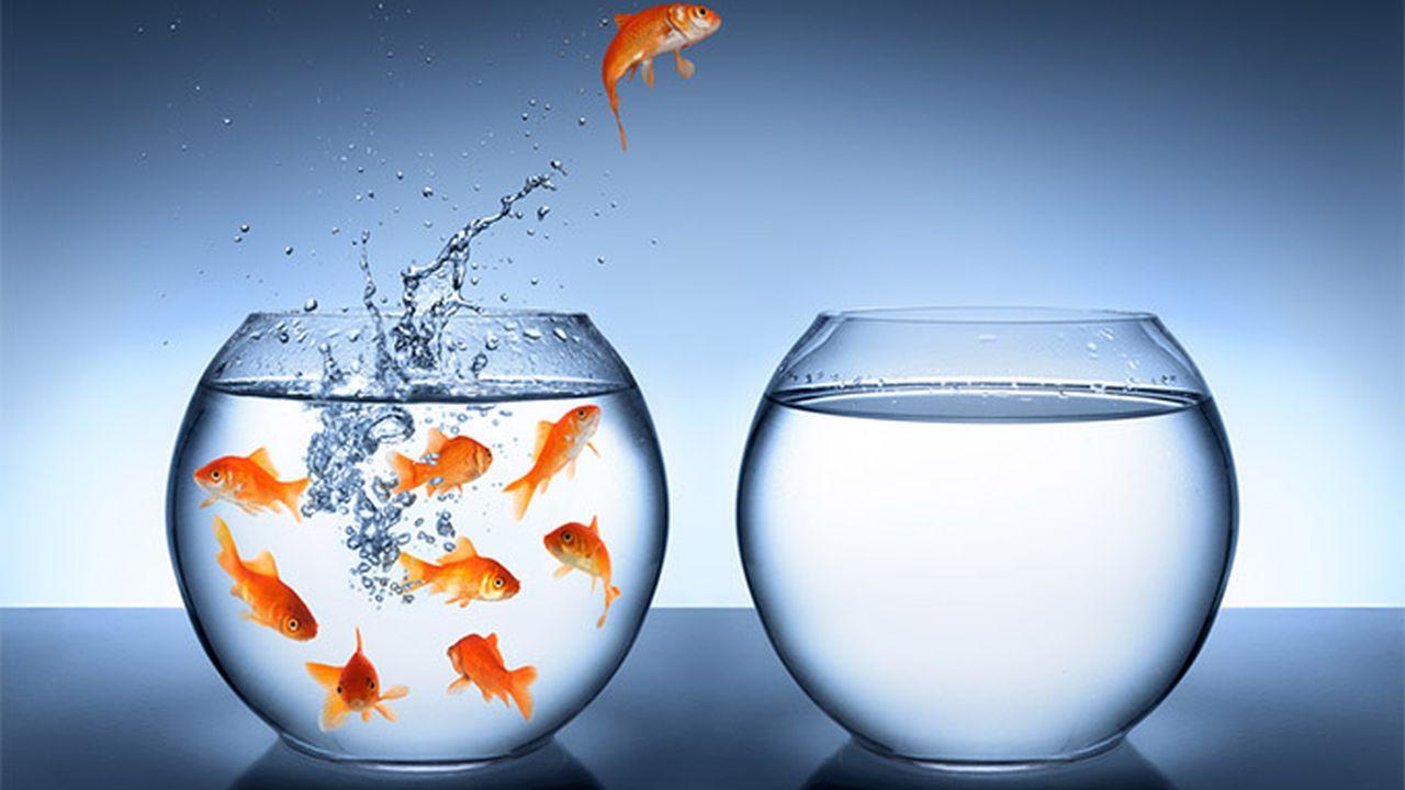 3103_1447414313_fish2.jpg