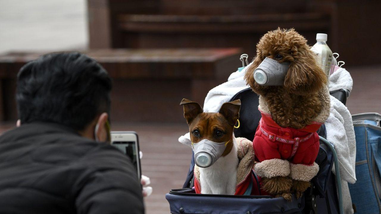 Jusqu'à maintenant, les Hongkongais testés positifs ne pouvaient pas garder leur animal domestique, mais ce dernier pouvait être confié à des tiers