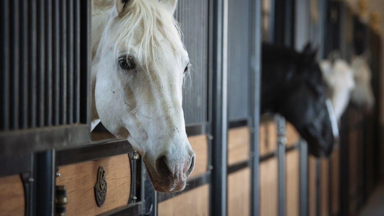 En octobre, un arrêté préfectoral avait interdit aux chevaux de l'établissement de sortir sans autorisation des autorités sanitaires.