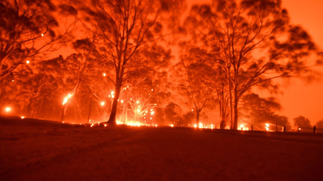 En Australie, des incendies sans précédent ont ravagé des millions d'hectares de forêts entre octobre et février.