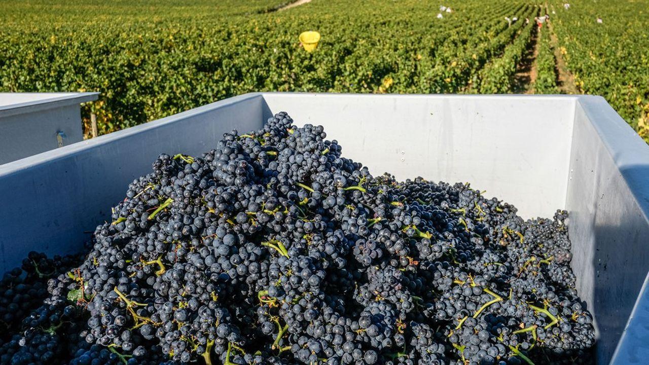 La récolte 2019 des vins de Bourgogne s'est avérée bien moins généreuse que celle, très abondante, de 2018, mais le cumul des volumes 2018 et 2019 reste supérieur de 7% à la moyenne des sorties de propriété sur la période 2009-2018.
