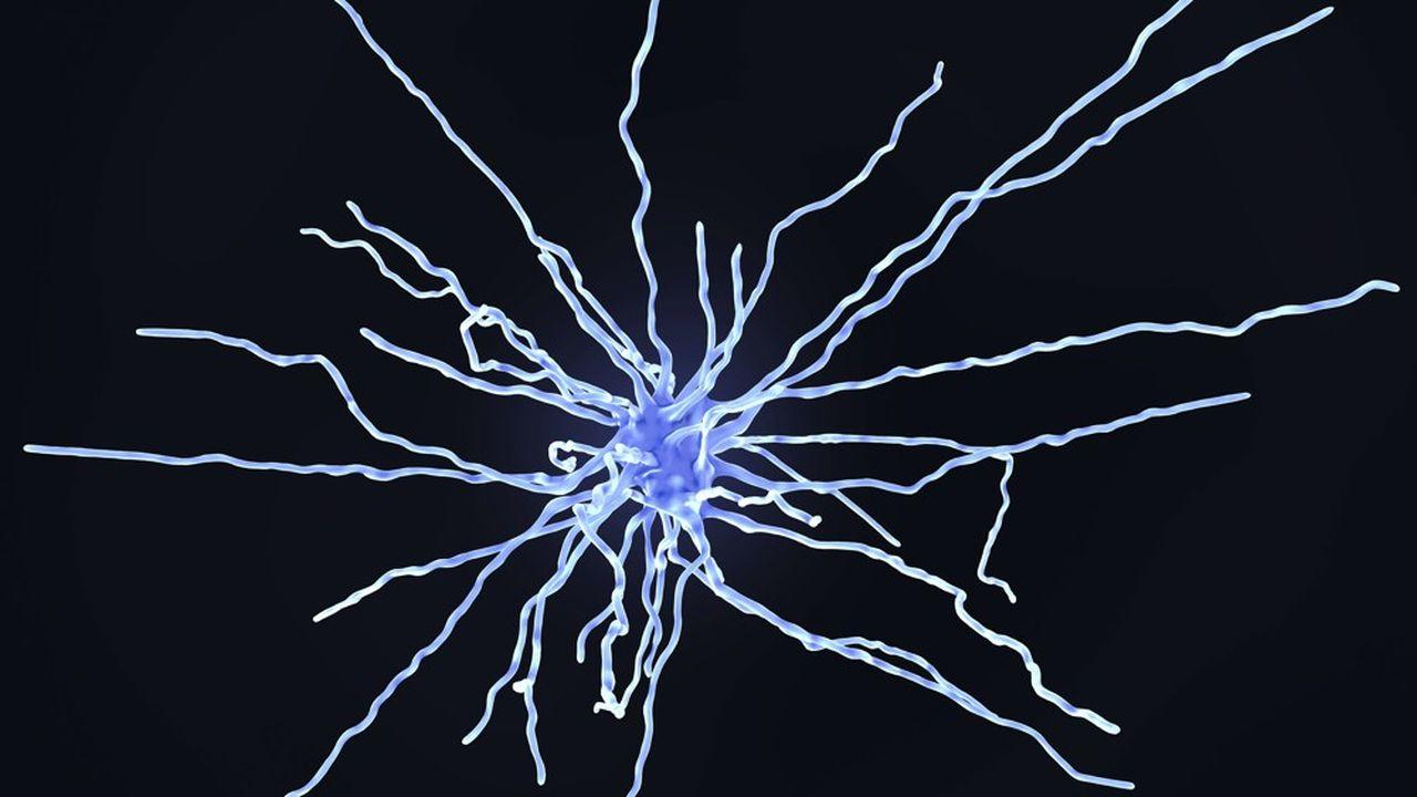 Les astrocytes, qui font partie des cellules gliales, sont reconnaissables à leur structure étoilée.