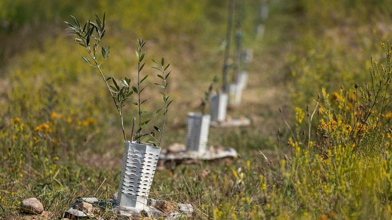 Land Life Company promet la reforestation de la planète grâce à une méthode scientifique et quasiment industrielle du reboisement.