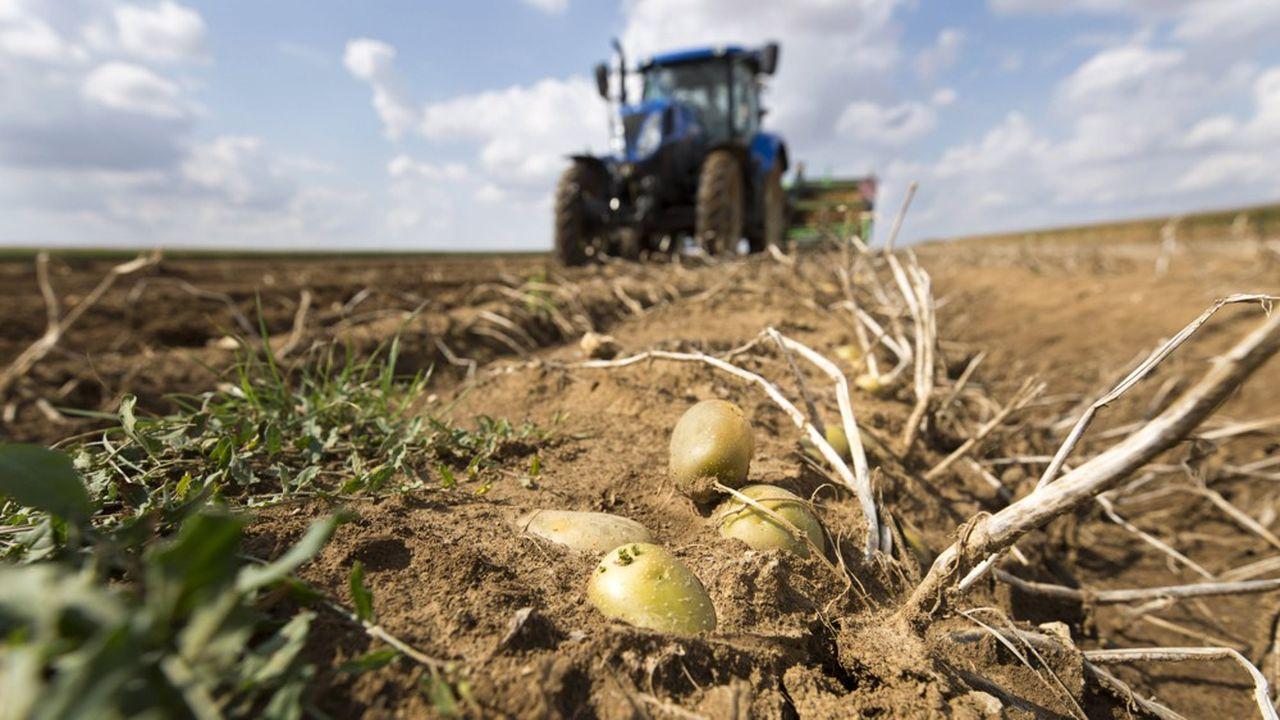 Une arracheuse passe au dessus des mottes pour recolter des pommes de terre en Eure et Loir.