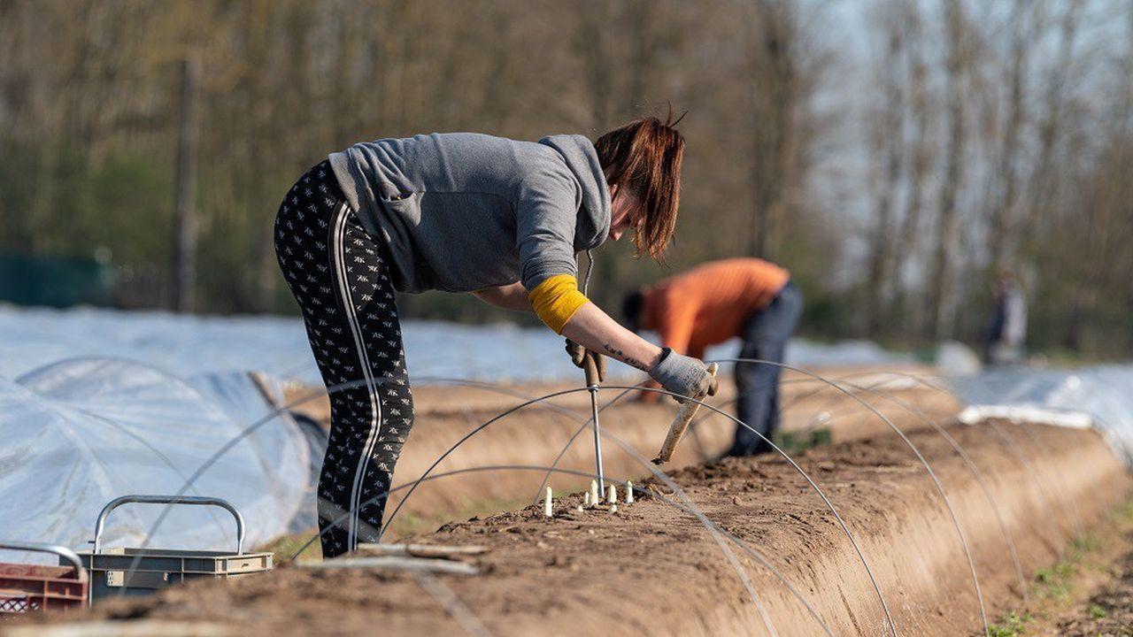 La demande de main-d'oeuvre est particulièrement forte dans le domaine de l'agriculture.