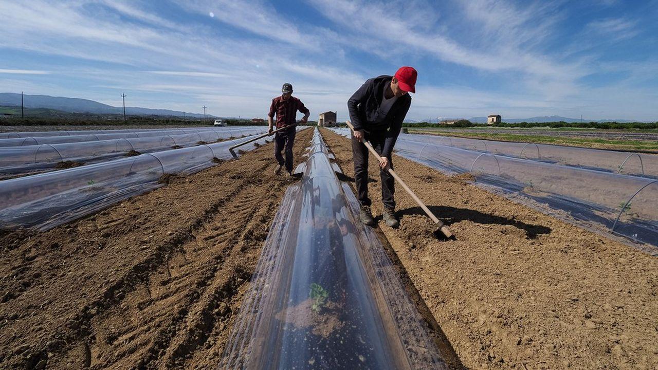 Pour l'instant l'agroalimentaire italien a fait face