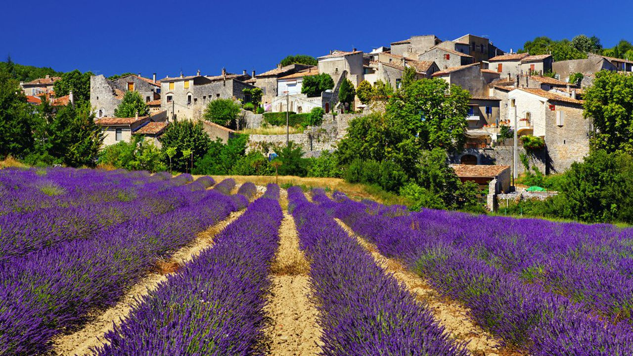Champs de lavende en Provence à Céreste.