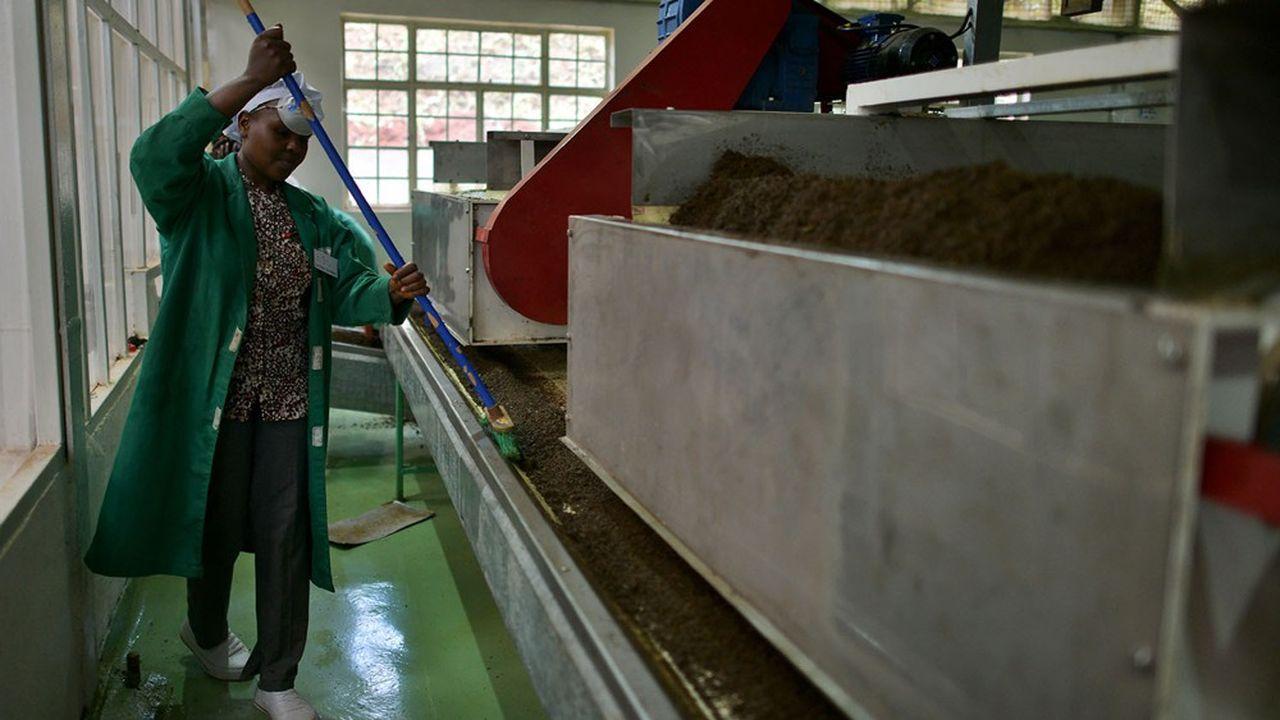 Un ouvrier maintient une ligne de transport de thé fermenté au Kenya, qui dépend de manière vitale de l'exportation de matières premières et produits alimentaires.