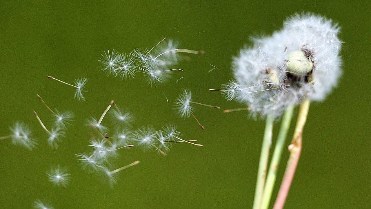 Quelque 30% de la population souffre d'allergies en France.