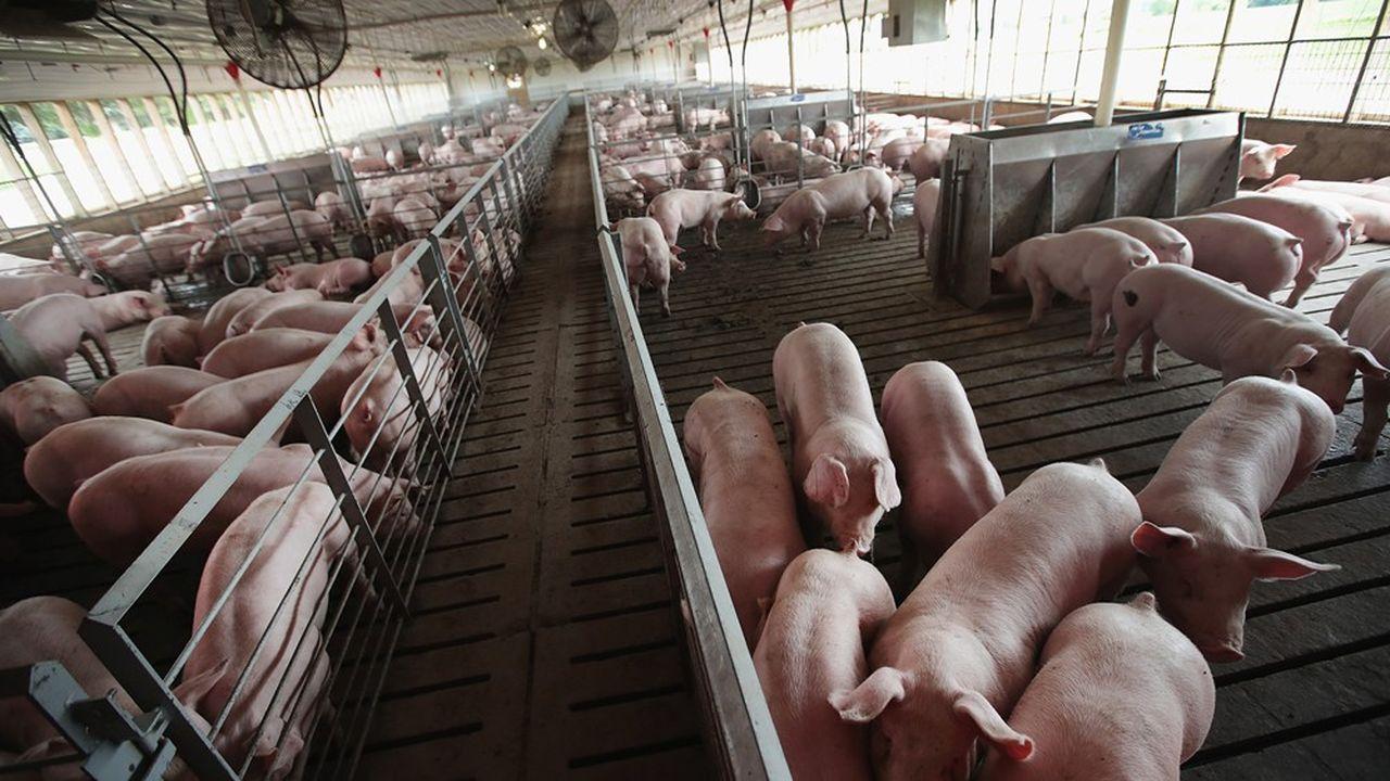 Un élevage de porcs dans l'Illinois aux Etats-Unis.