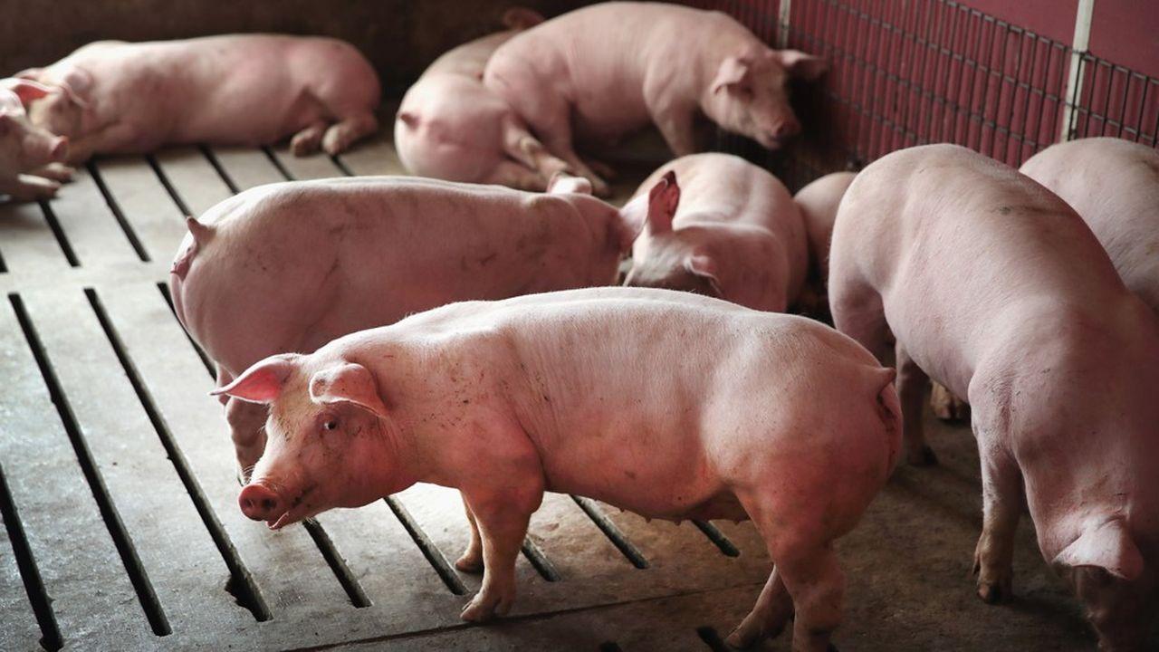 Plus d'un quart des capacités dans la filière porc sont à l'arrêt, près de 10 % dans la filière boeuf.