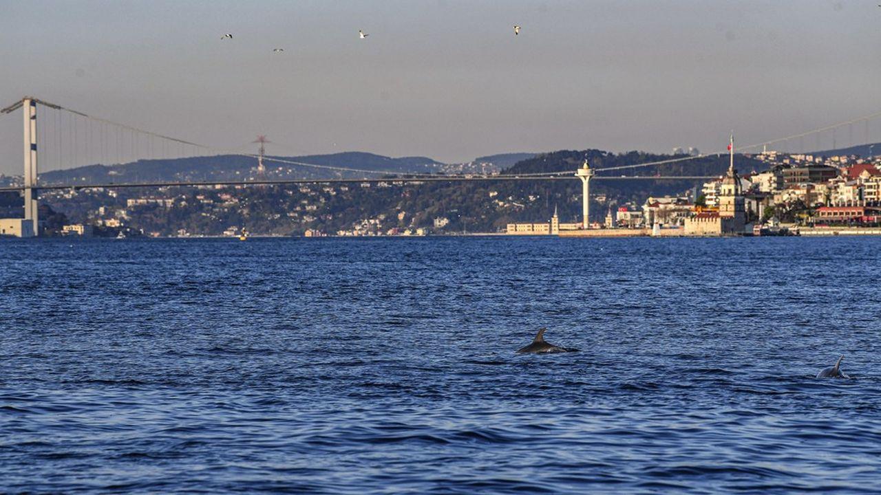 Le détroit du Bosphore, entre l'Europe et l'Asie à Istanbul, un des plus animés du monde habituellement, est d'un calme sans précédent à cause du confinement en vigueur dans la plupart des pays du Caucase ou d'Asie centrale. Au point que les dauphins y reviennent.