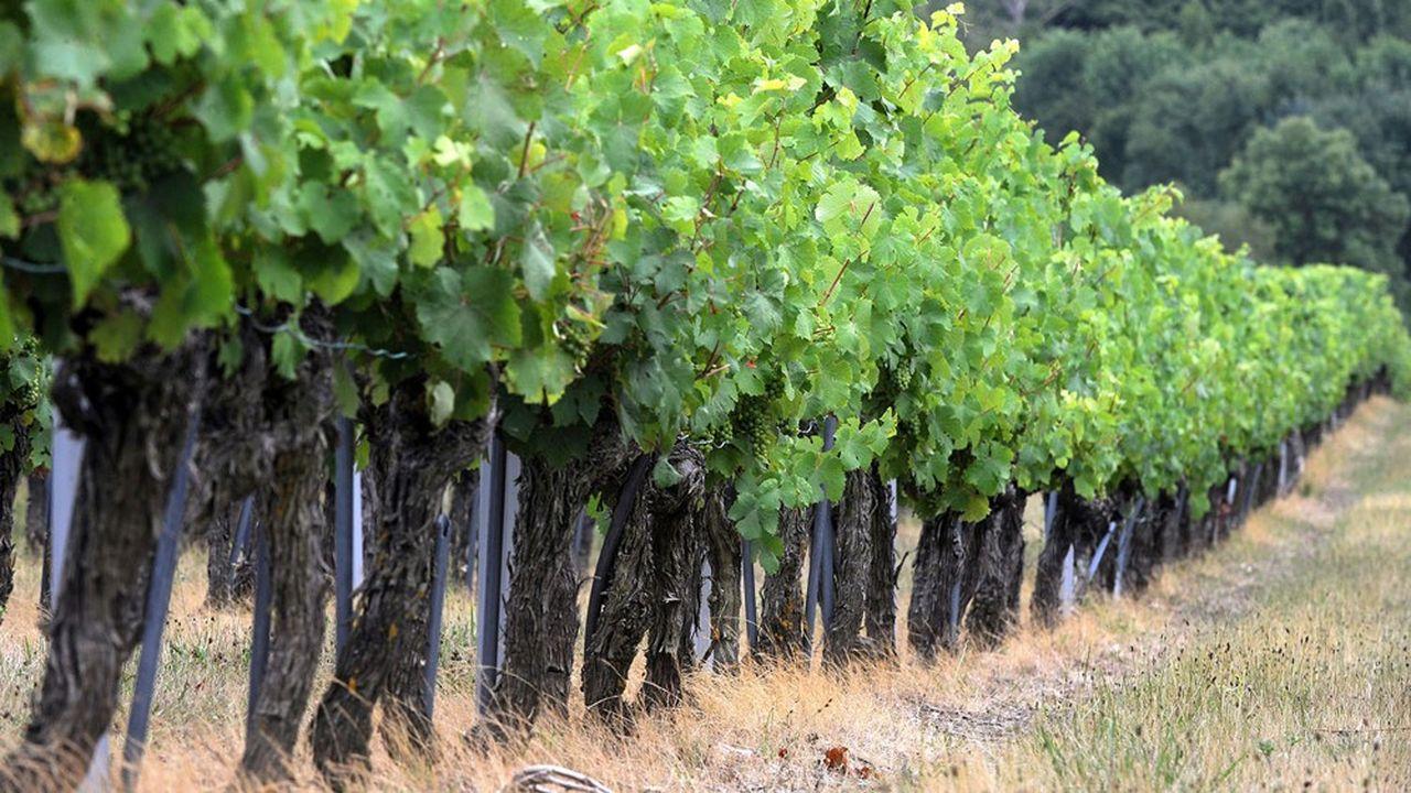 Devant l'export (22%), le secteur de la restauration-hôtellerie et la vente directe représentent 44% des ventes des vins de Loire.