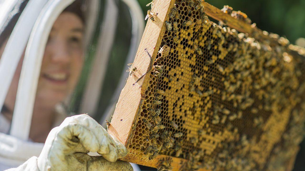 De nombreux apiculteurs s'attendent à une belle récolte de miel de printemps.
