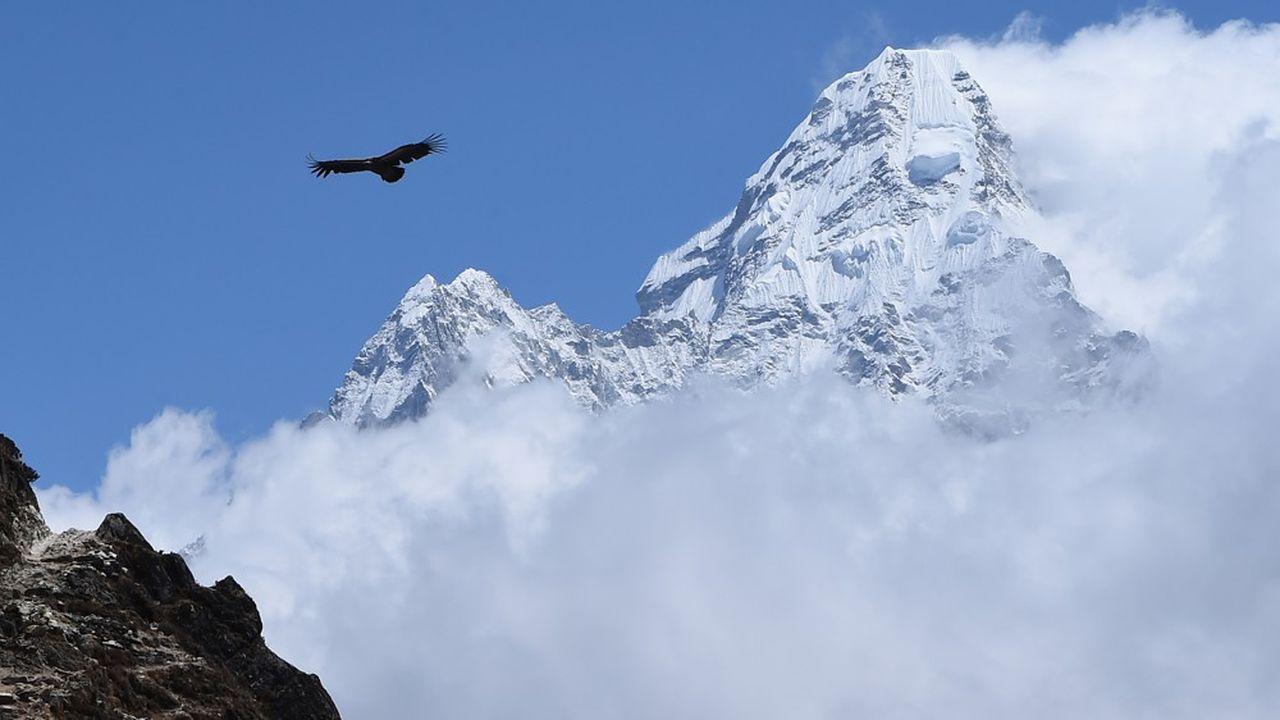 Les aménagements des domaines skiables perturbent la quiétude des grands rapaces.