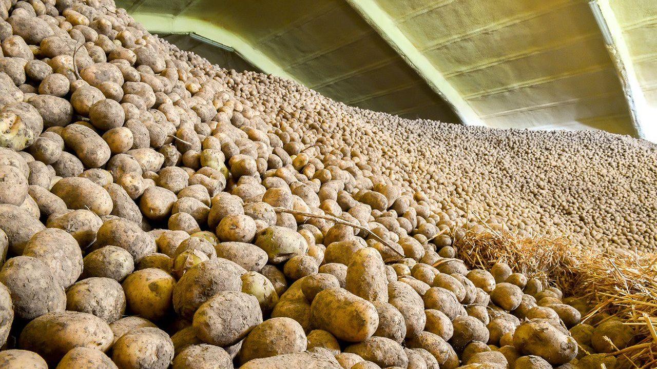 La France produit 6 à 7millions de tonnes de pommes de terre par an.