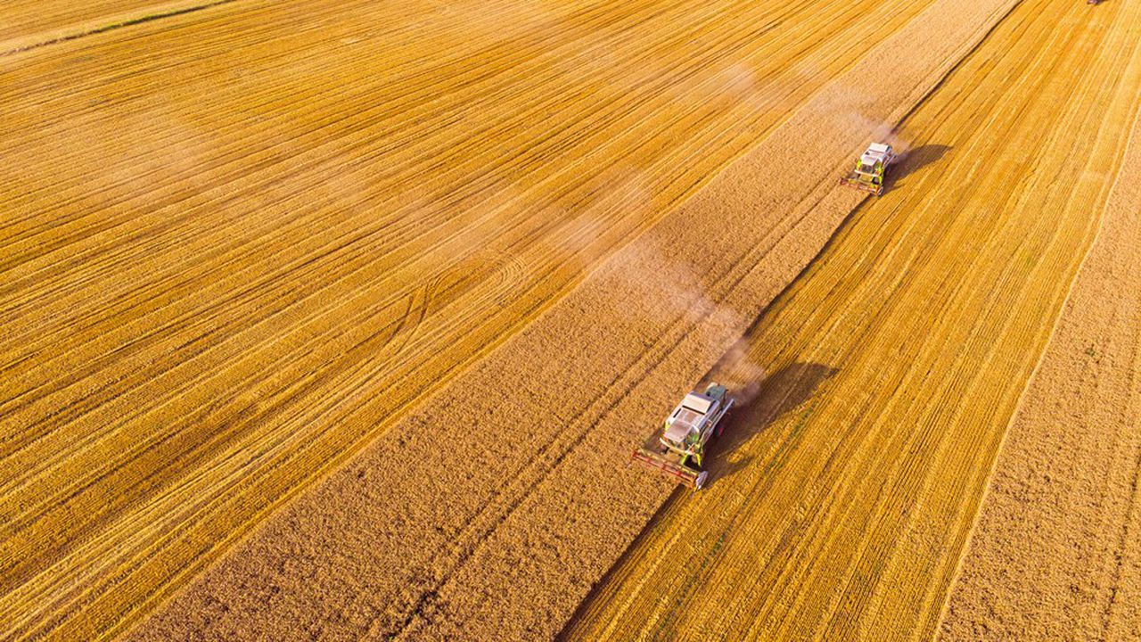 Le blé est l'une des rares denrées alimentaires à voir ses cours augmenter.