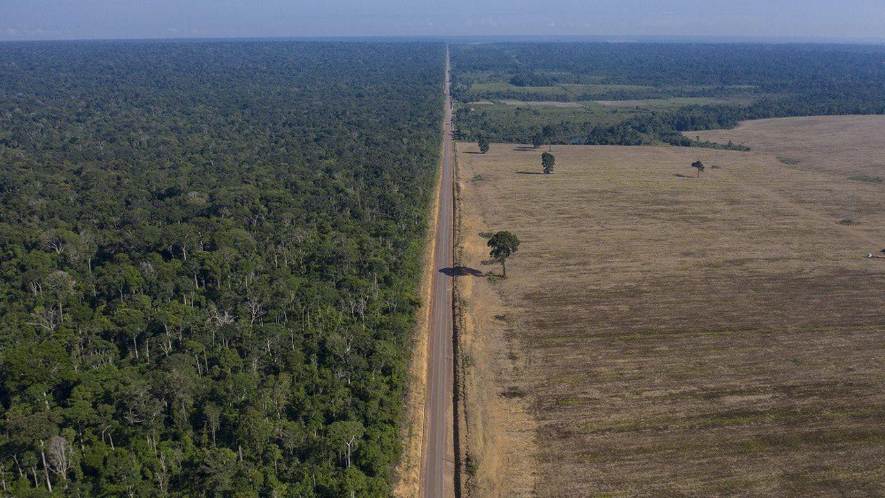 Cette photo prise en novembre2019 montre la limite entre les champs de soja et la forêt nationale du Tapajos, au Brésil.