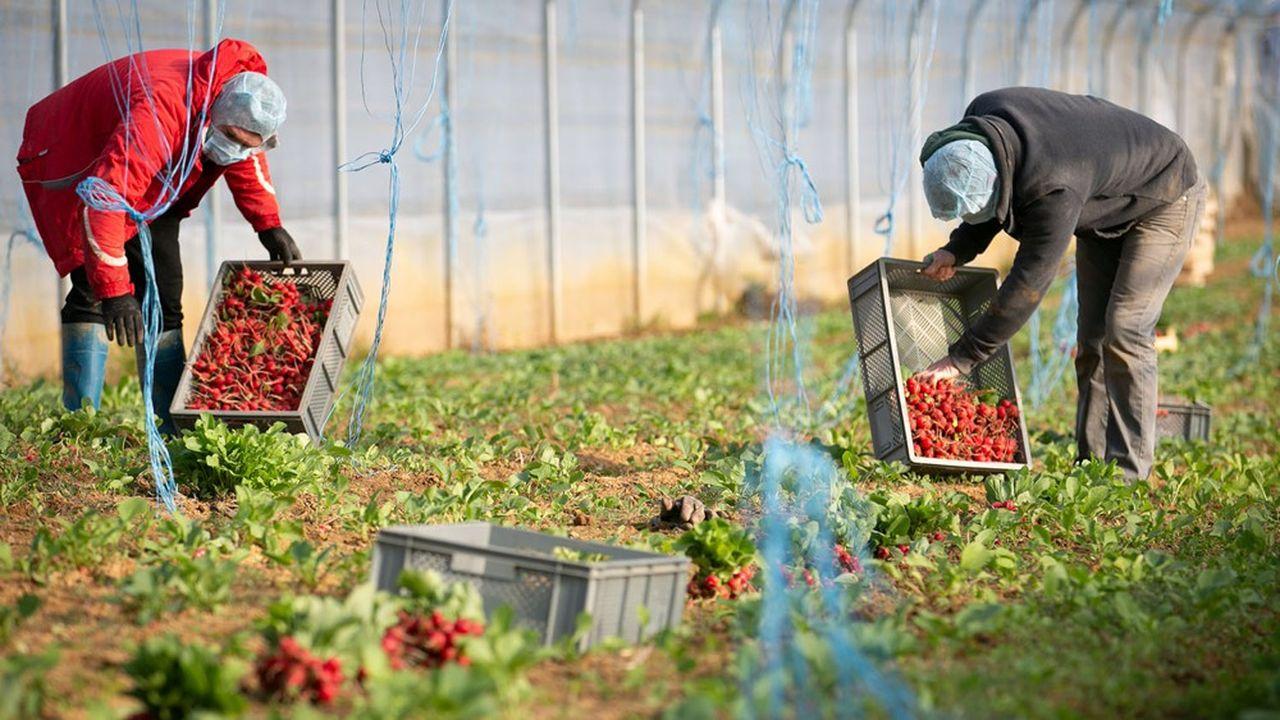 'L'agriculture française a besoin de beaucoup de main-d'oeuvre saisonnière, c'était 40.000 à 50.000 salariés au mois d'avril, c'est 100.000 à partir de ce mois-ci et c'est un vrai problème', selon Didier Guillaume, ministre de l'Agriculture.