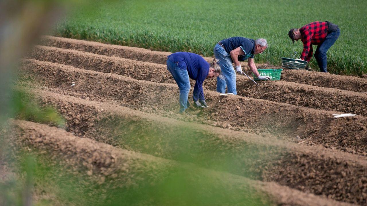 D'après Pôle emploi, un seul secteur a vu son volume d'offres d'emploi augmenter en mars-avril sur un an: l'agriculture.