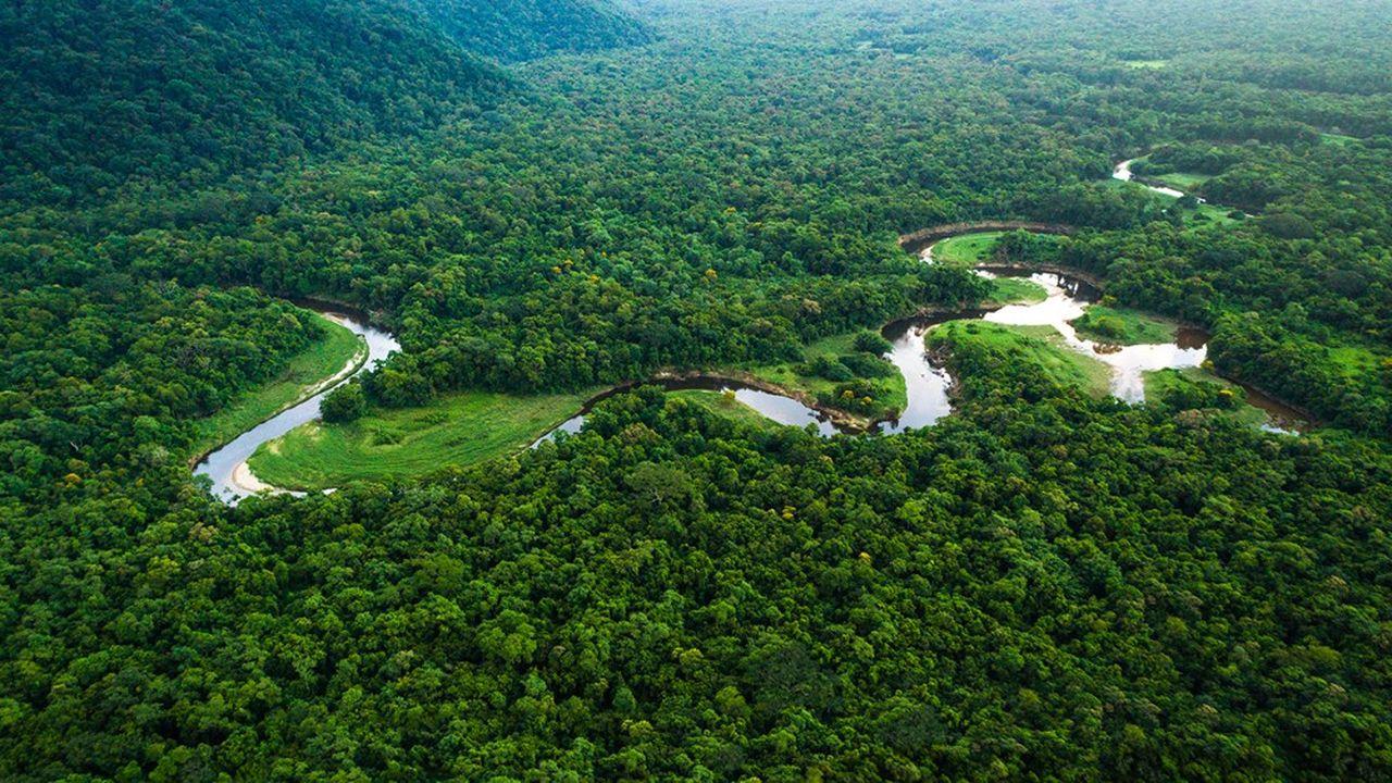 Chaque degré d'augmentation de la température libérerait 51milliards de tonnes de CO2 des forêts tropicales dans l'atmosphère.