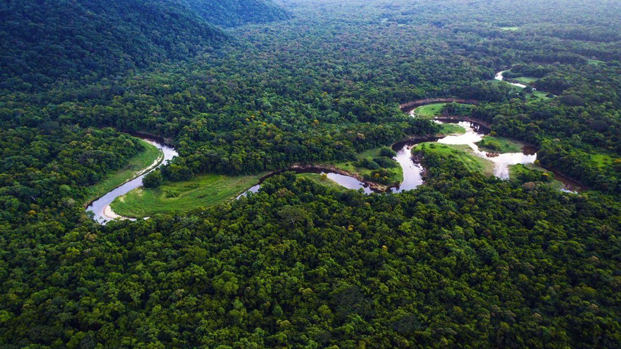 La forêt Mata Atlantica au Brésil.