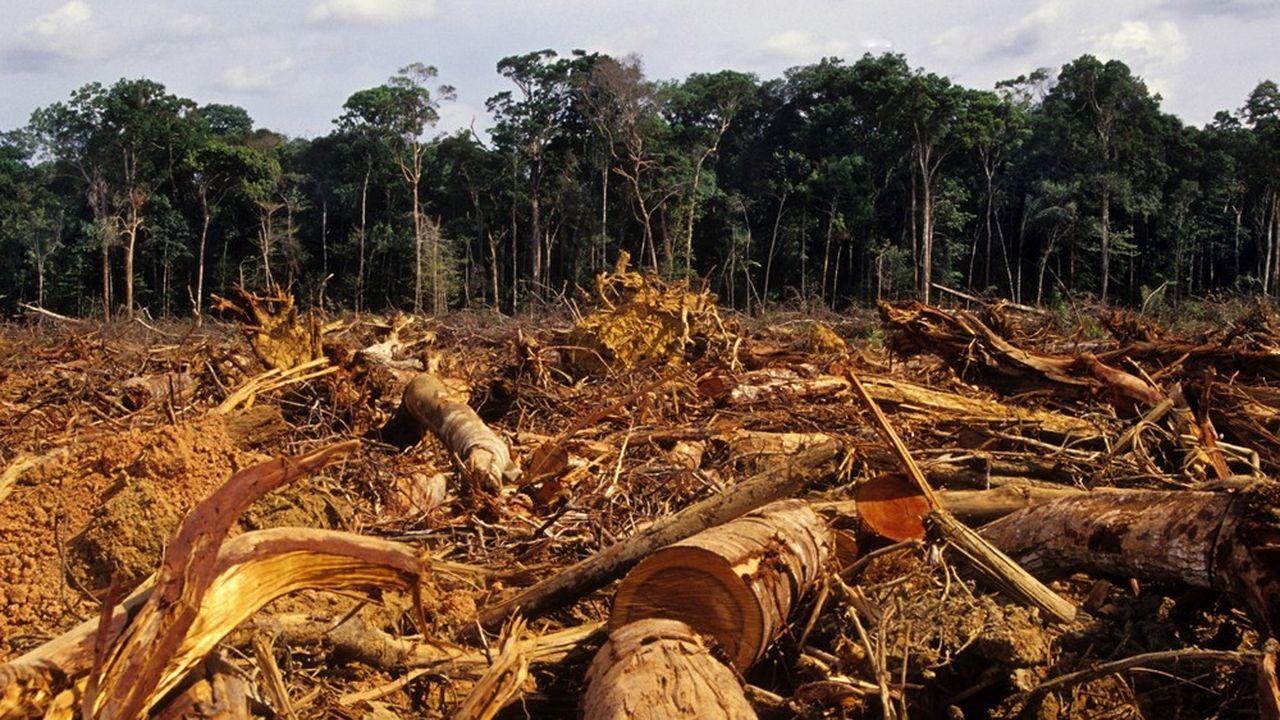 Dans le domaine de la gestion durable, la lutte contre le changement climatique a pris une place prépondérante. En revanche, l'impact des activités sur la biodiversité au sens large reste difficile à appréhender.