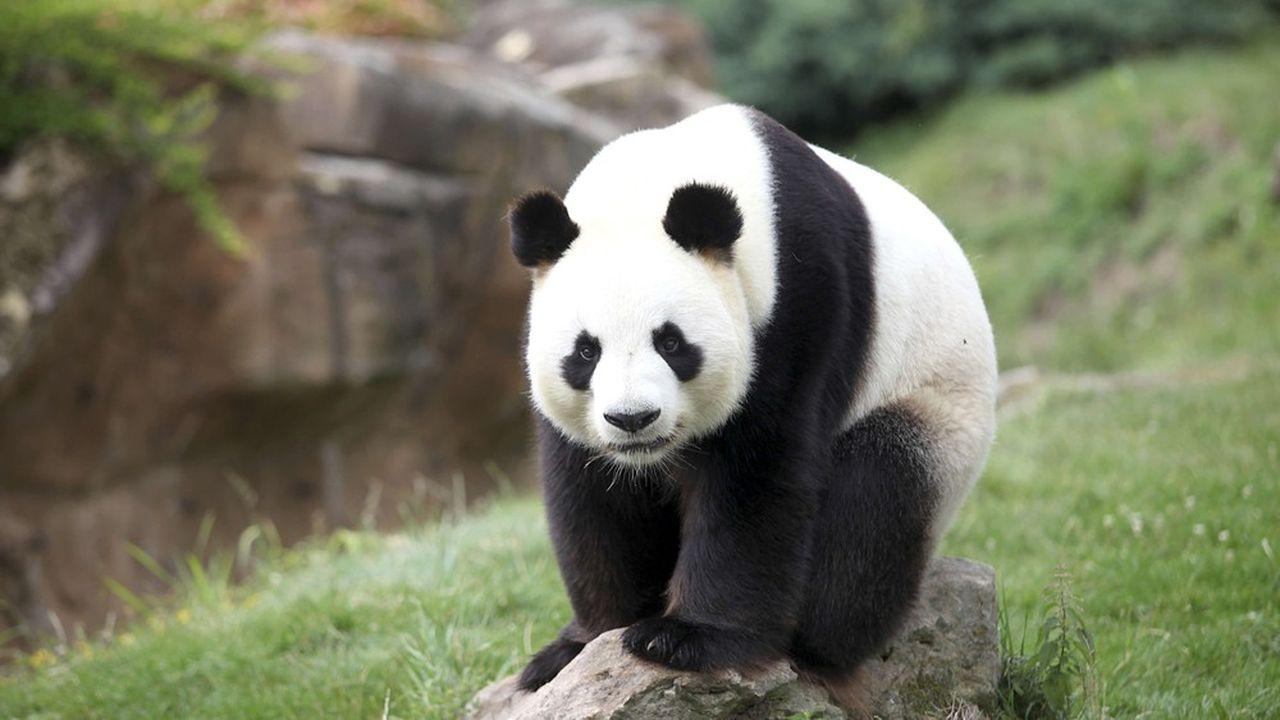 Le Parc de Beauval et ses fameux pandas.