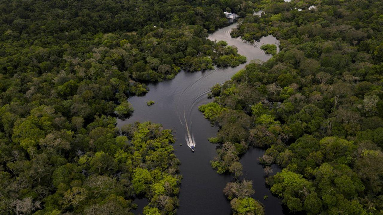 Environ 38.000km2 de forêt tropicale primaire ont été détruits l'an dernier, Soit l'équivalent d'un terrain de football toutes les six secondes.