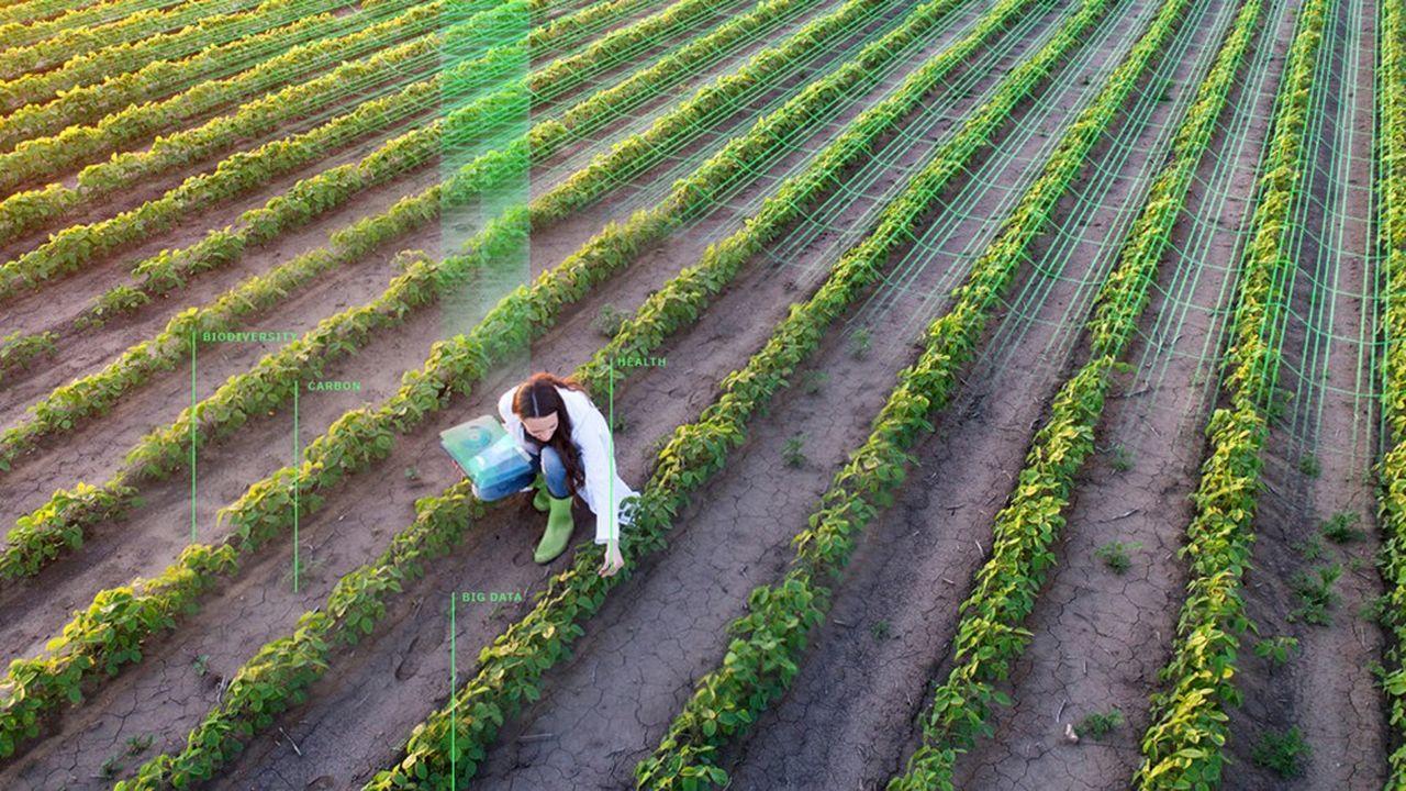 Avec sa méthode de notation unique, Greenback veut permettre de mieux connaître et d'améliorer l'état des sols cultivés, dont 52% à travers le monde sont dégradés.
