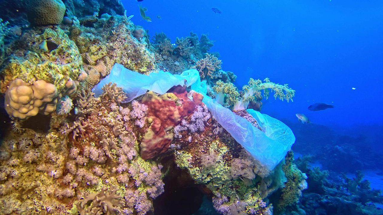 Entre 5 et 13millions de tonnes de plastique se déversent dans les océans chaque année.