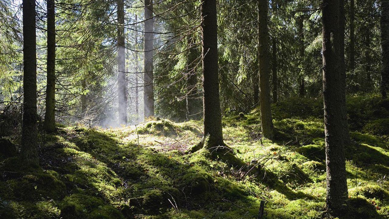 Forêts : un marché toujours dynamique