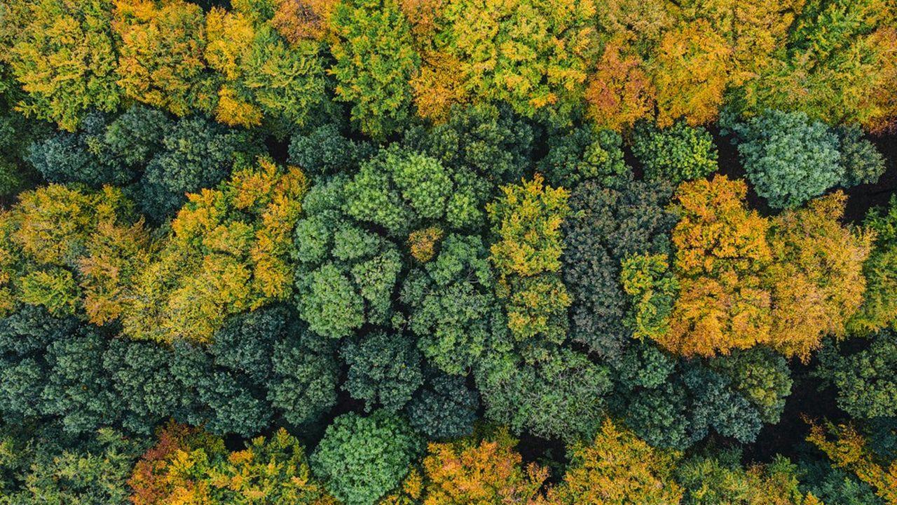 La forêt, un actif prisé des investisseurs
