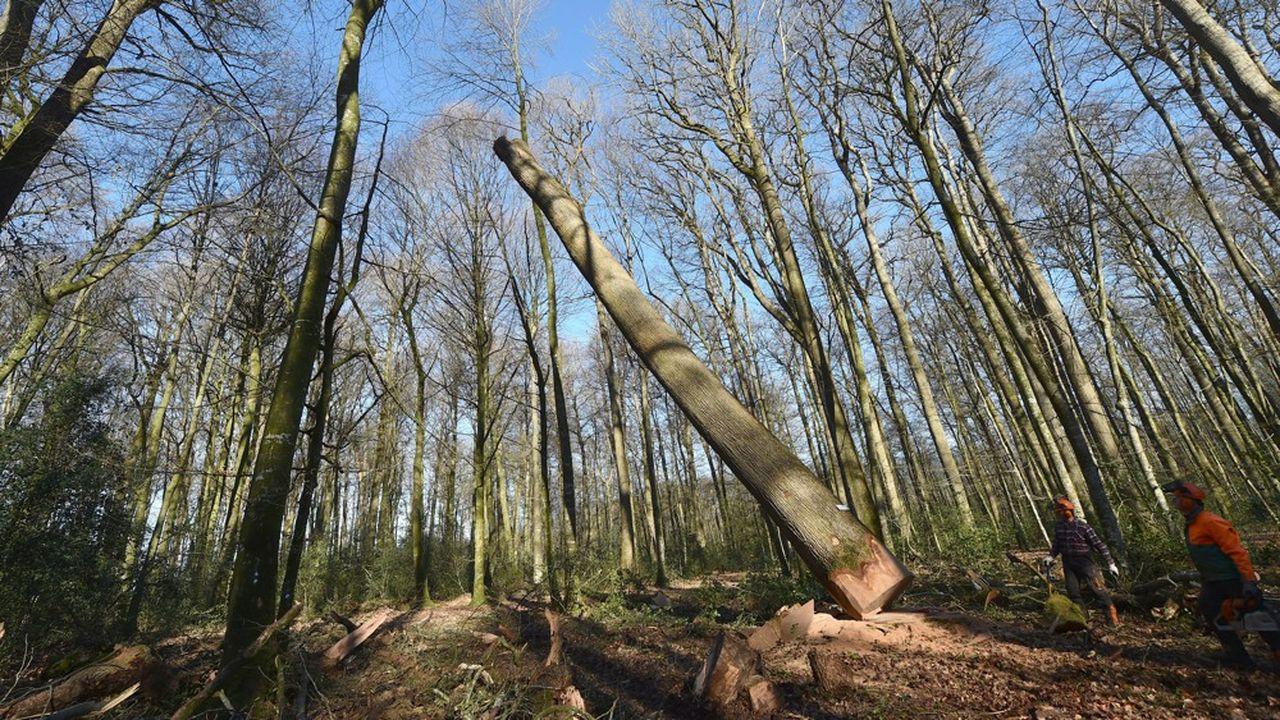 Le puits de carbone national, constitué notamment par les forêts, n'absorbe qu'un peu plus de 40% des émissions liées au «carbone vivant».