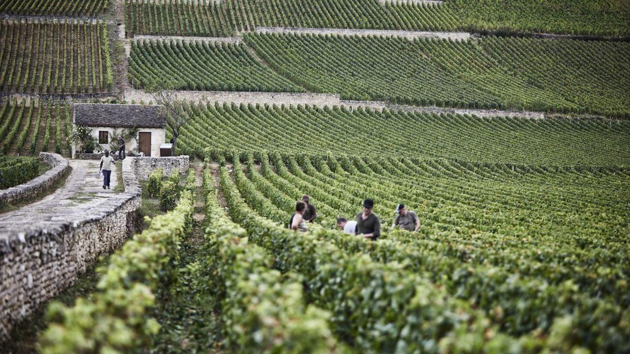 La Vigne de l'Enfant Jésus est l'un des joyaux du domaine beaunois.