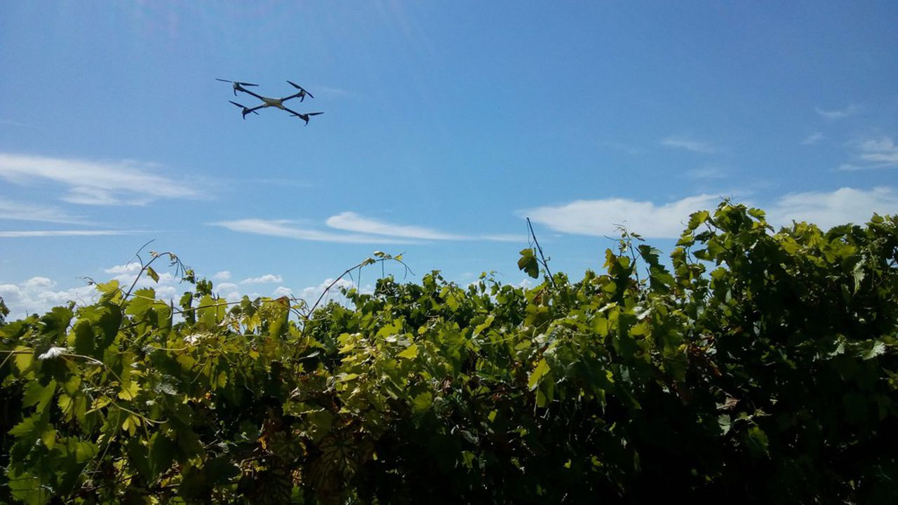 Vins: 10 spécialistes français de la Winetech
