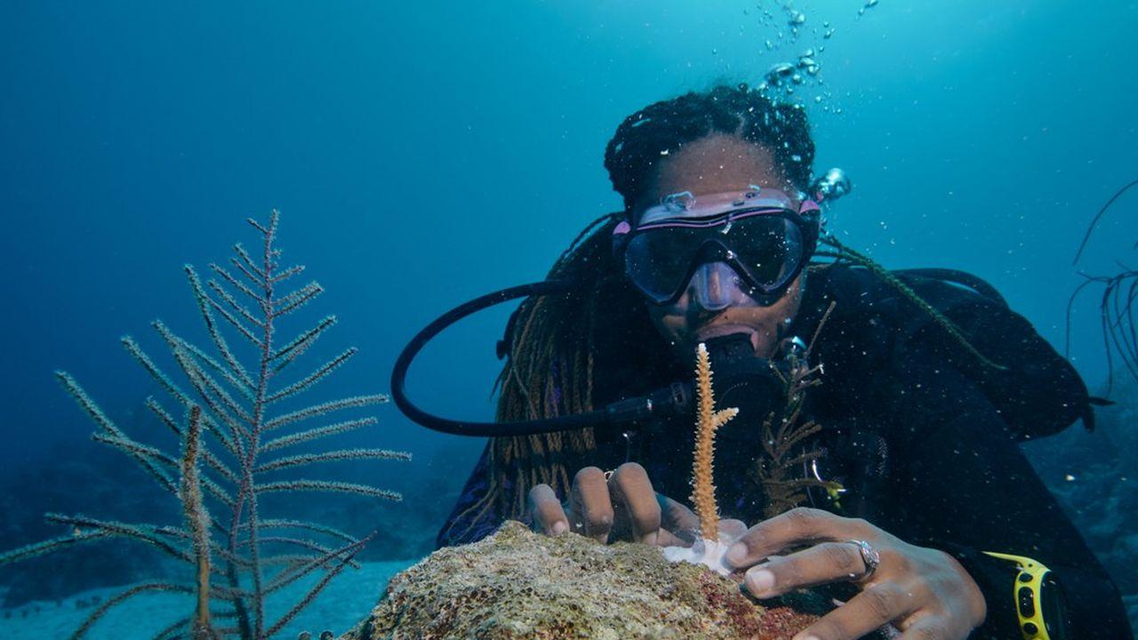 Pépinière de coraux aux Bahamas