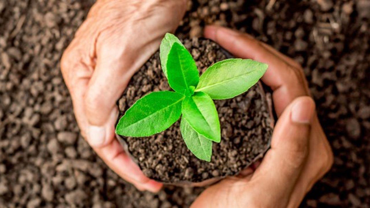 Les Champions de la croissance 2020 dans l'environnement