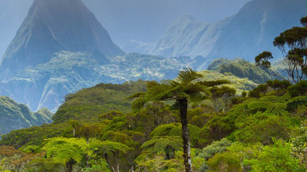 Les Champions de la croissance 2020 à la Réunion