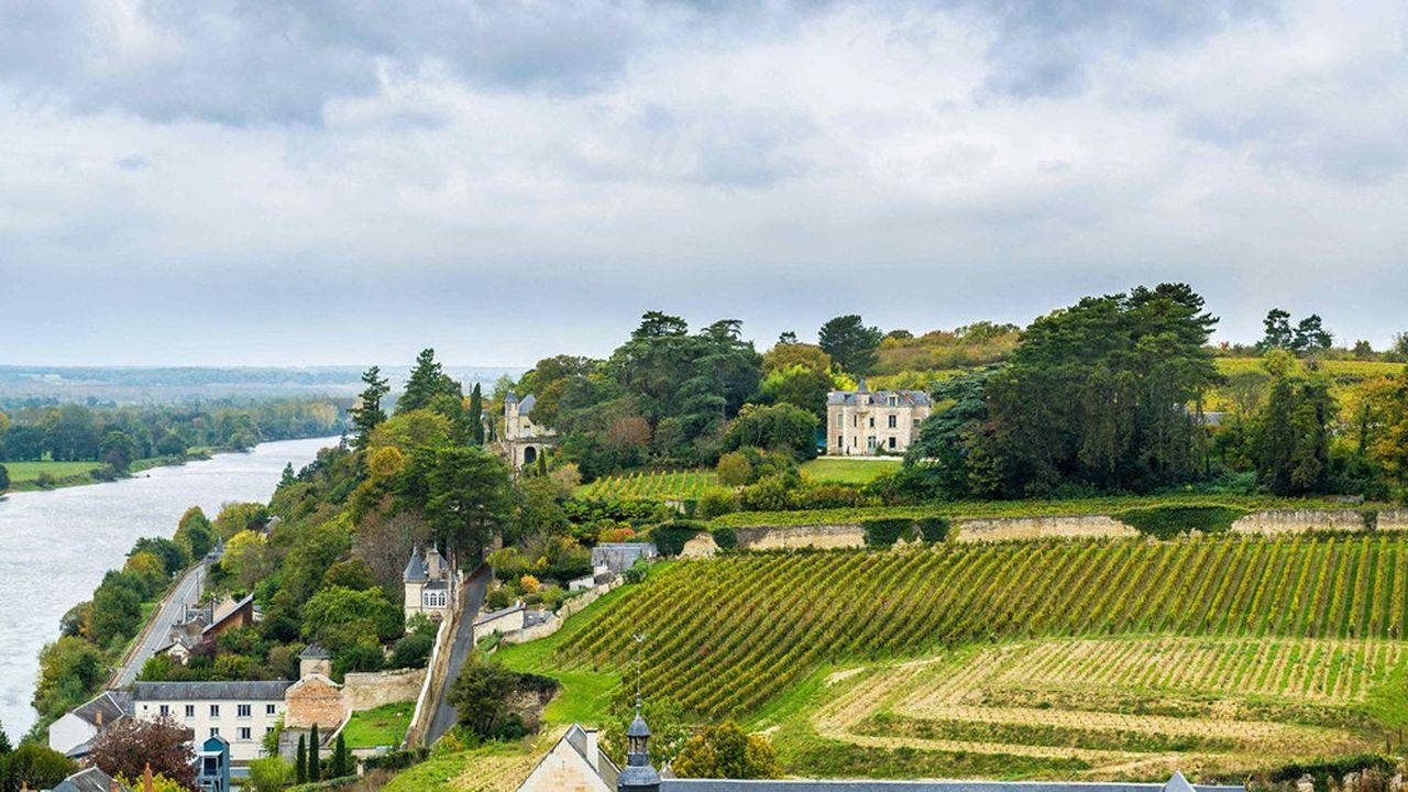 Vignoble de Touraine, à Chinon (Indre-et-Loire), fief du cabernet franc, cépage rouge et ligérien par excellence.