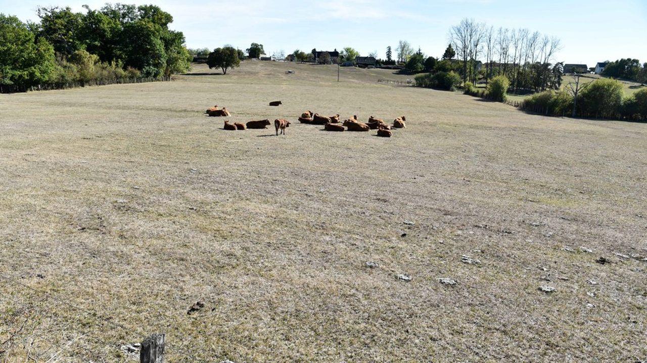 Dans le Limousin, les longues vagues de sécheresse liées au dérèglement du climat, font déjà sentir leurs effets sur l'élevage.