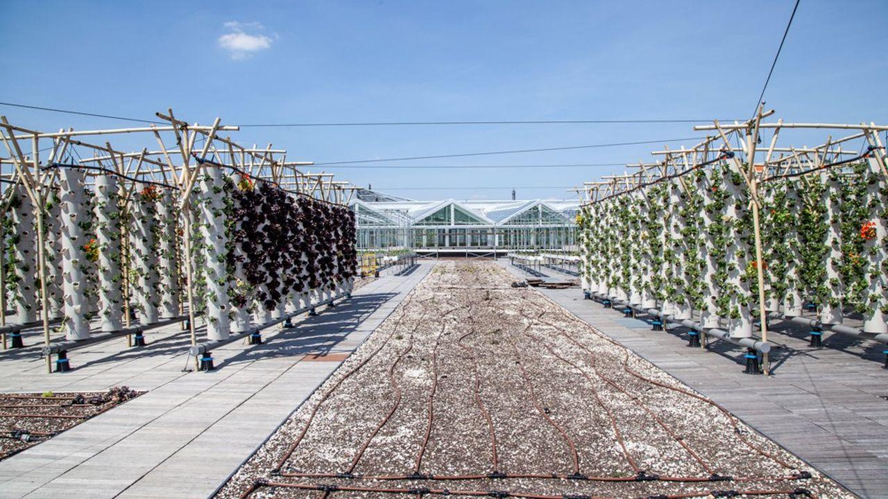 Paris Expo a ouvert la plus grande ferme urbaine en toiture d'Europe.