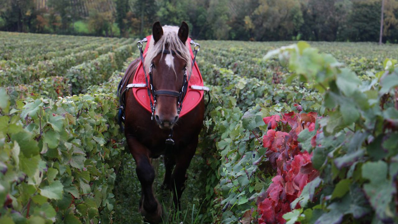 Les champagnes J. de Telmont sont une propriété traditionnelle, en agriculture raisonnée, où le tiers des raisins est certifié Bio.