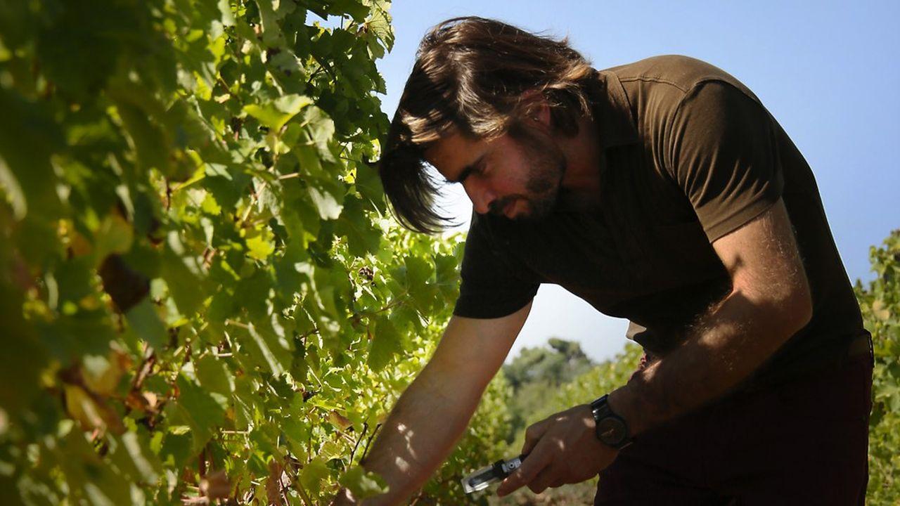 Jean-Jacques Dubourdieu: «Le mode de consommation du sauternes doit être celui du bar à vins»
